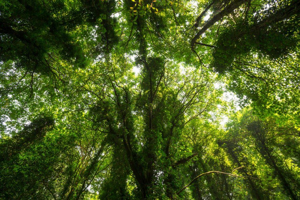Tacoma Needs More Trees. Yes, Really.