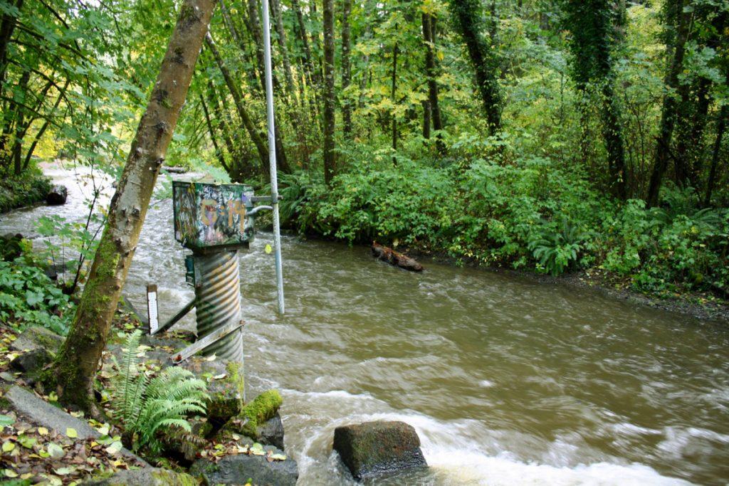 In Search of Chambers Creek Salmon