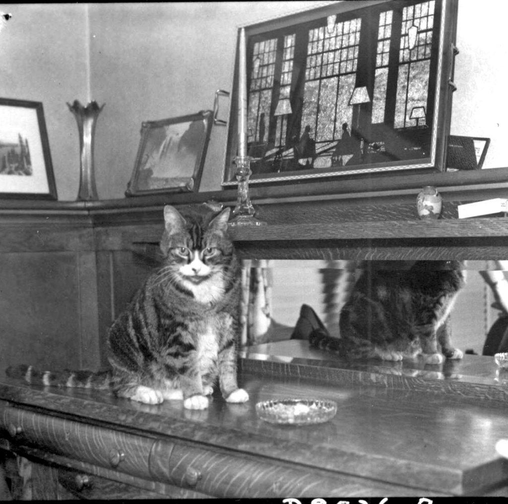 Toodles Tacoma cat